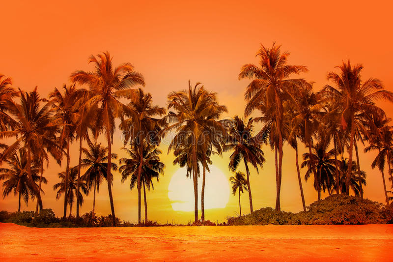Пальмы на предпосылке захода солнца Sri Lanka стоковое фото rf