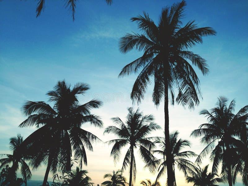 Пальмы на предпосылке красивого захода солнца стоковое изображение