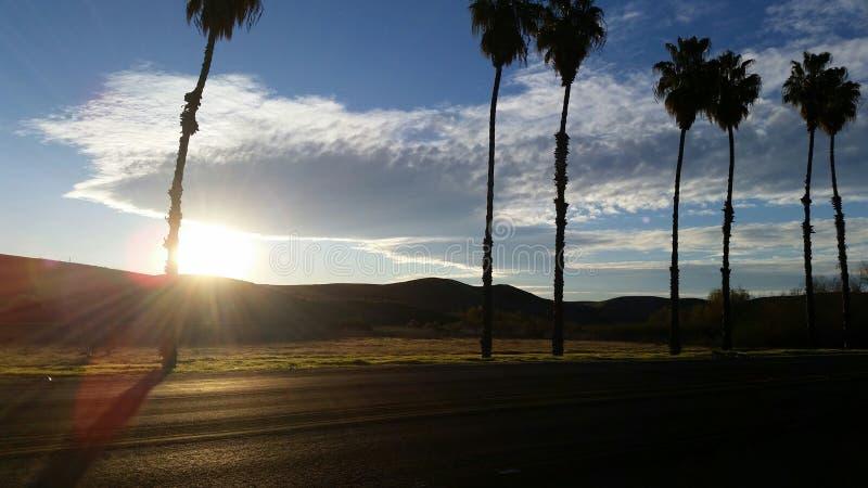 Пальмы на славный солнечный день стоковое изображение rf
