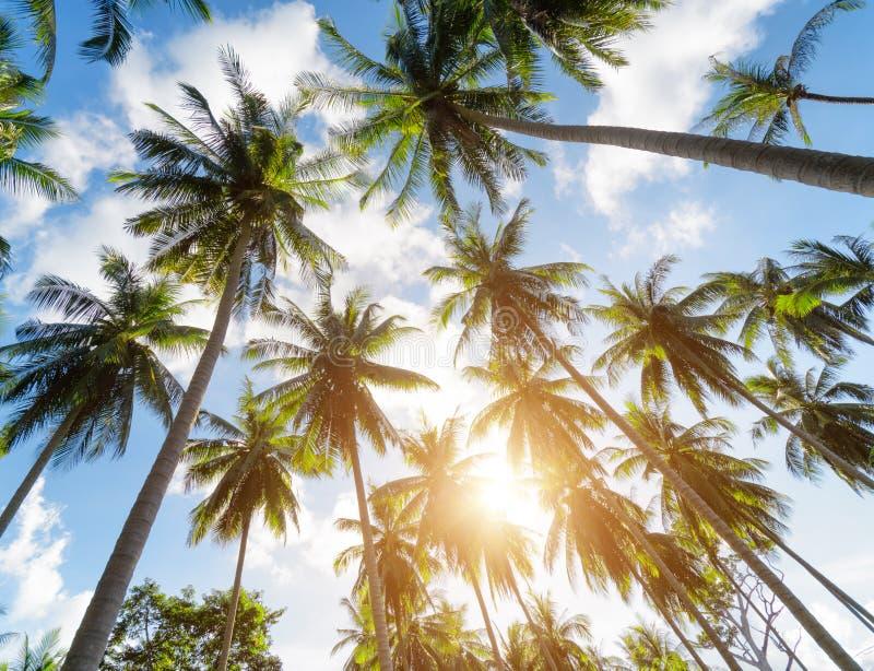 Пальмы против голубого неба стоковая фотография rf