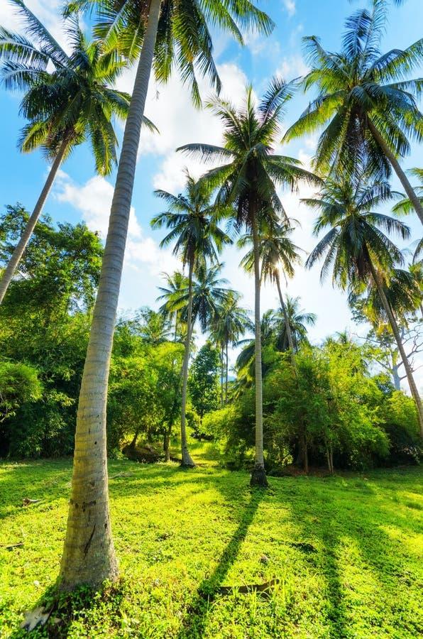 Пальмы против голубого неба стоковые изображения rf