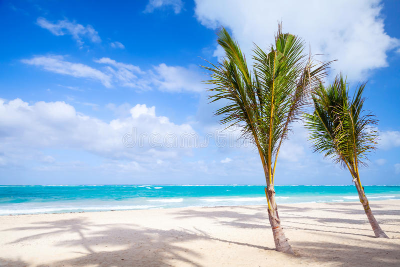 Пальмы растут на пустом песчаном пляже Доминиканский Республика стоковые фотографии rf
