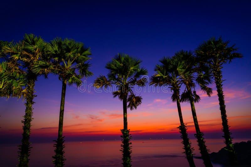 Пальмы сахара силуэта на пляже на сумерк стоковые изображения rf