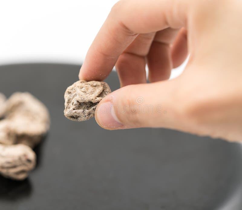 Пальцы женщины держа высушенное посоленное китайское семя сливы от черноты стоковая фотография rf