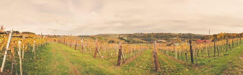 Пейзаж виноградника стоковое изображение rf