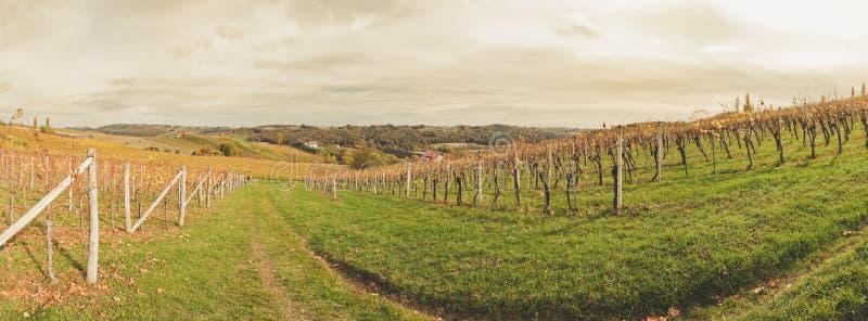Пейзаж виноградника стоковая фотография