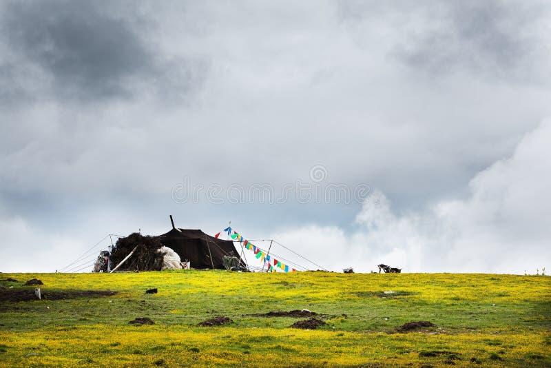 Пейзаж в Тибете стоковое изображение rf