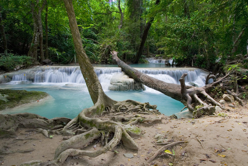 пейзаж джунглей стоковое изображение rf