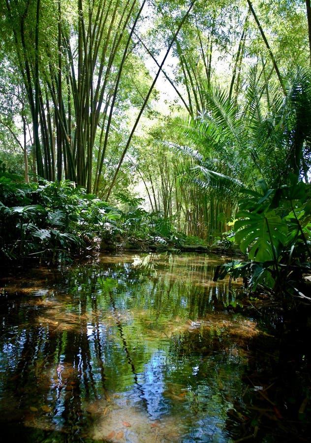 пейзаж джунглей стоковая фотография