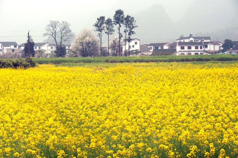 Пейзаж деревни и плантации цветка в Wanfenglin, Гуйчжоу в c стоковое фото