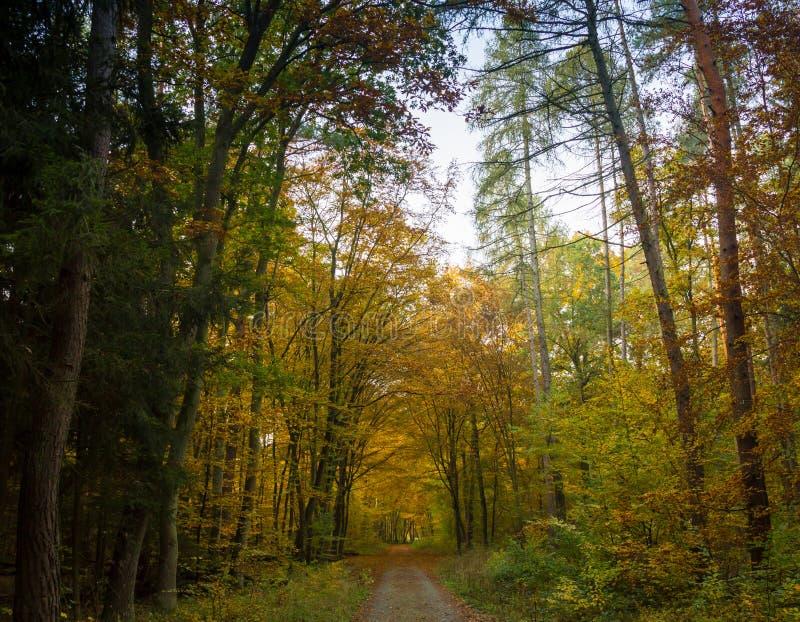 Пейзаж леса осени при лучи теплого света illumining листва золота и тропы водя в сцену стоковое фото