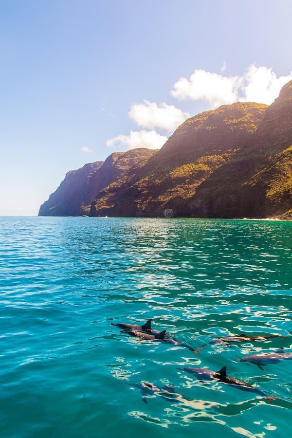Пейзаж живой природы Тихого океана Гаваи стоковое фото rf