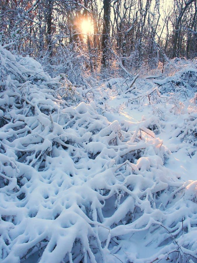 Пейзаж зимы парка Allerton стоковые изображения rf