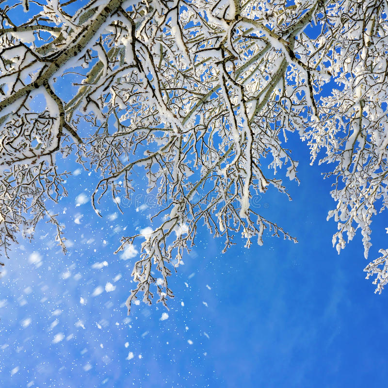 Пейзаж зимы стоковые фотографии rf
