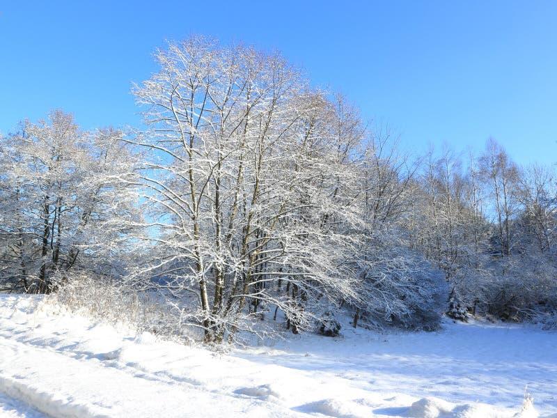 Пейзаж зимы стоковые изображения rf