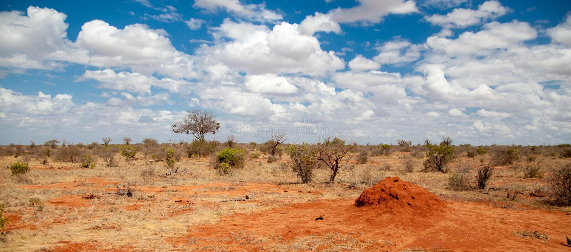 Пейзаж Кении, на сафари стоковые фото