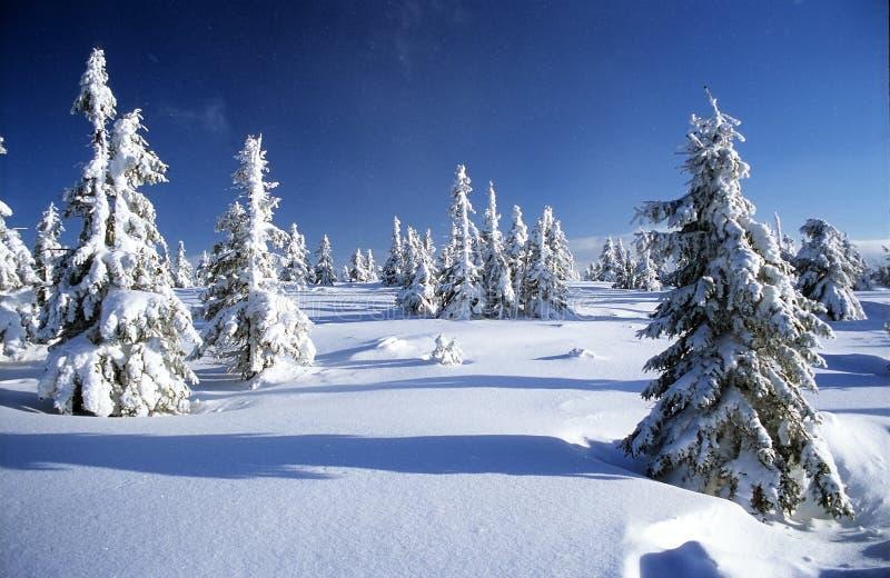пейзаж ландшафта зимний стоковое фото rf