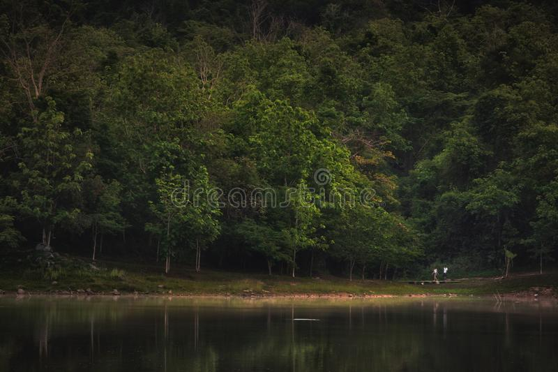 Пейзаж леса на Jedkod Saraburi стоковые фотографии rf