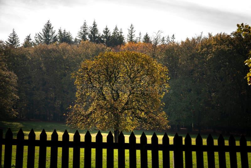 Пейзаж леса осени с листьями падения & теплым светлым illumining t стоковые изображения rf