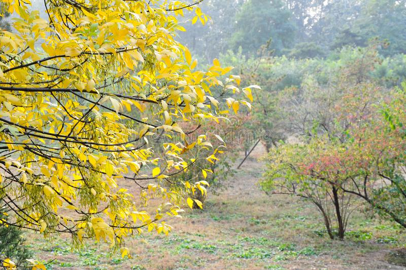 Пейзаж осени, осень самые красивые с в конце октября до в конце ноября стоковые изображения rf