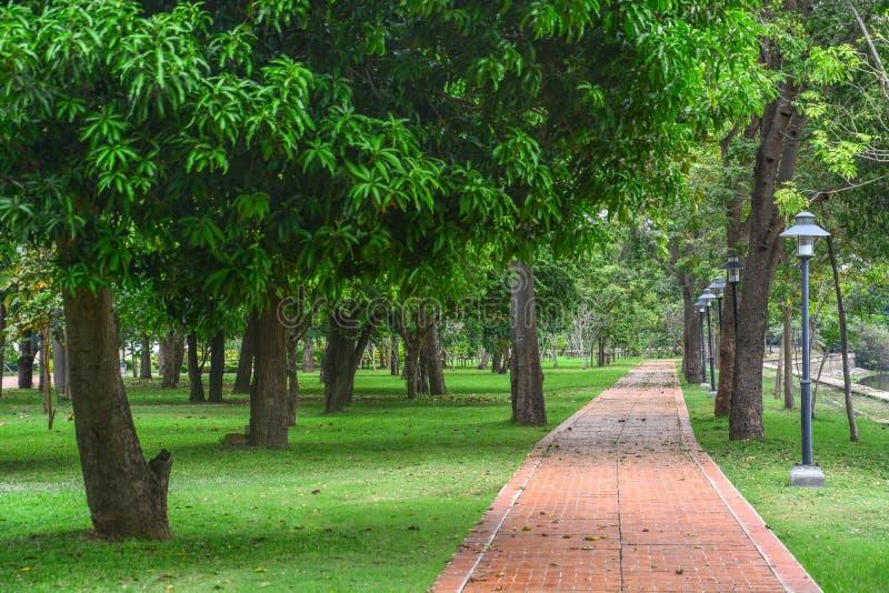 пейзаж прямых красных кирпичных дорожек с зелеными газонами в саду стоковое фото rf
