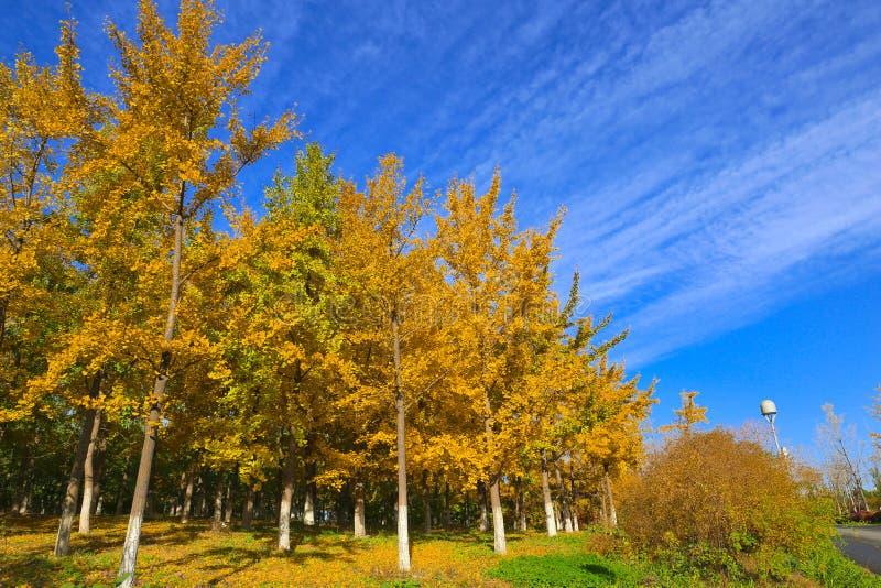 ПейзажAutumnстоковая фотография rf