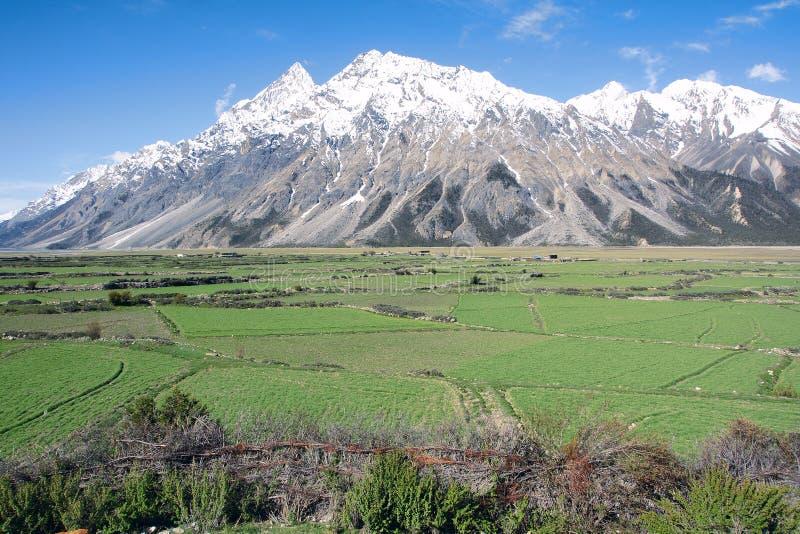 Пейзаж Cropland стоковое изображение rf