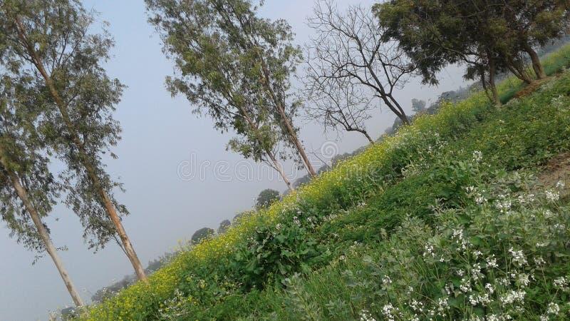 Пейзаж India& x27; поля сельского хозяйства s красивые стоковая фотография rf
