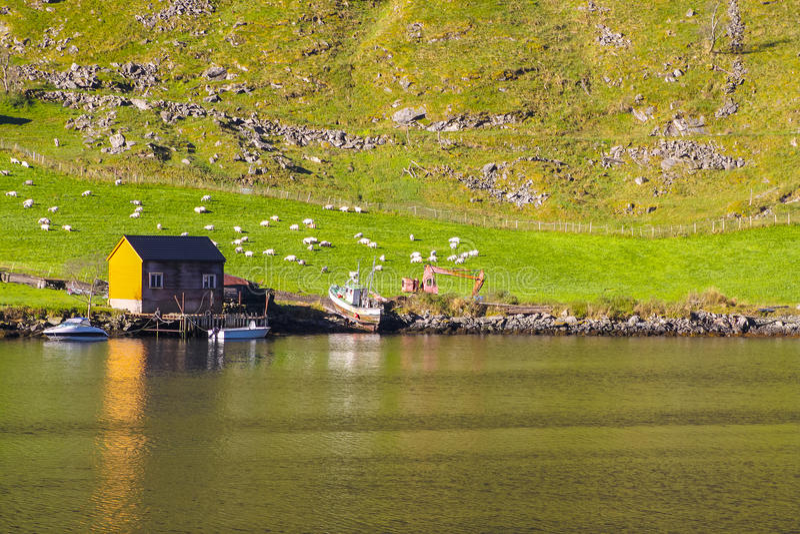 Пейзаж Sognefjord, Норвегия, Скандинавия стоковое изображение rf