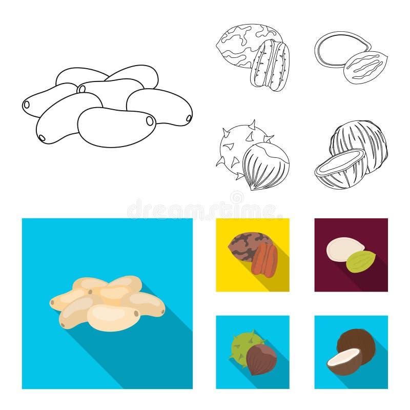 Пекан, гайка сосны, семена тыквы, каштан Различные виды значков собрания гаек установленных в плане, плоском векторе стиля иллюстрация вектора