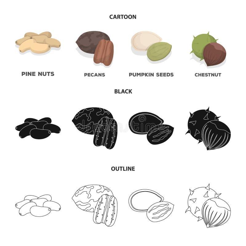 Пекан, гайка сосны, семена тыквы, каштан Различные виды значков собрания гаек установленных в шарже, черноте, стиле плана иллюстрация вектора