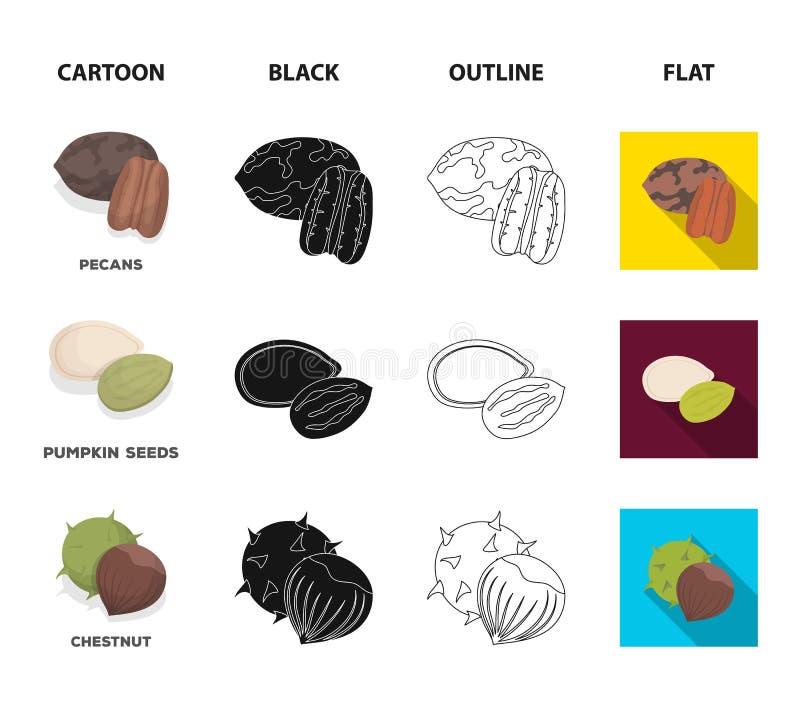 Пекан, гайка сосны, семена тыквы, каштан Различные виды значков собрания гаек установленных в шарже, черноте, плане, плоском иллюстрация вектора