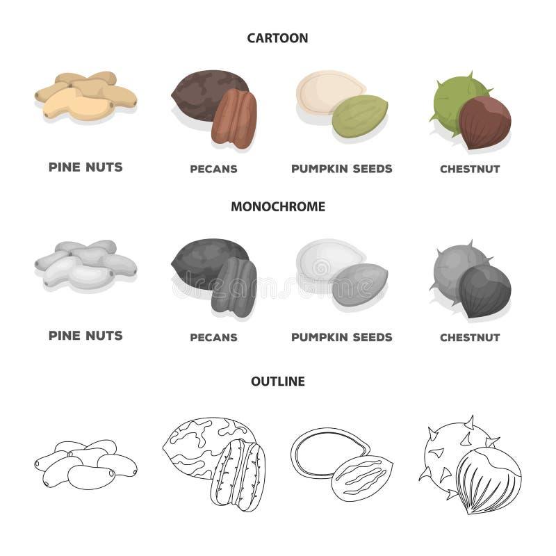 Пекан, гайка сосны, семена тыквы, каштан Различные виды значков собрания гаек установленных в шарже, плане, monochrome иллюстрация штока