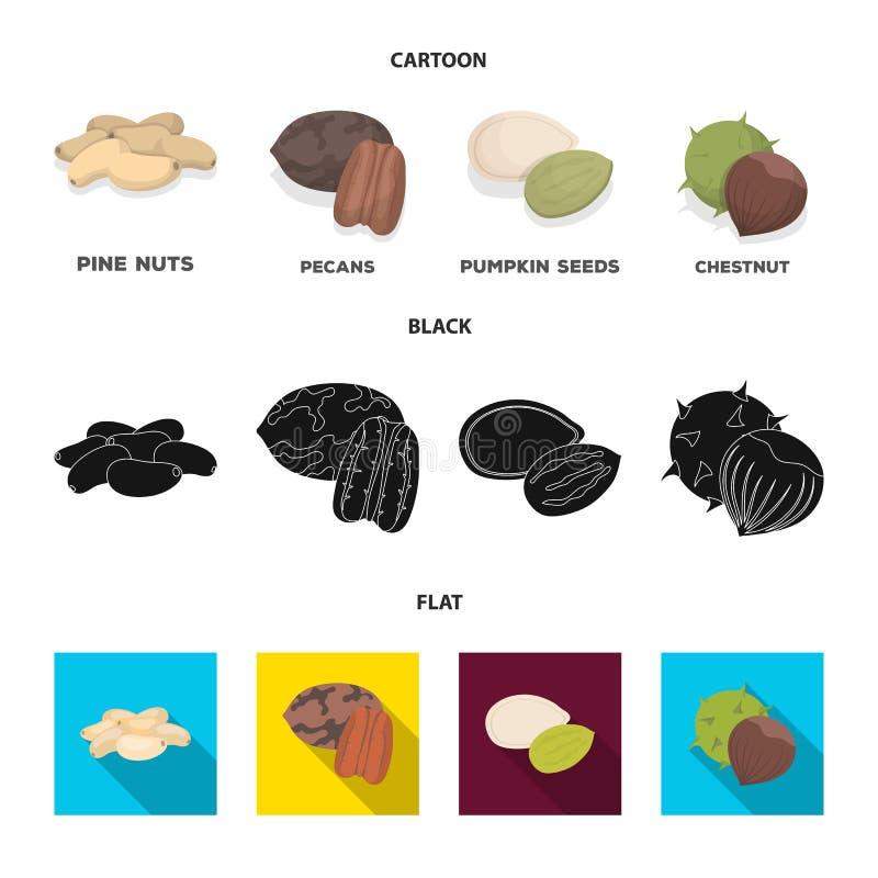 Пекан, гайка сосны, семена тыквы, каштан Различные виды значков собрания гаек установленных в шарже, черноте, плоском векторе сти иллюстрация штока