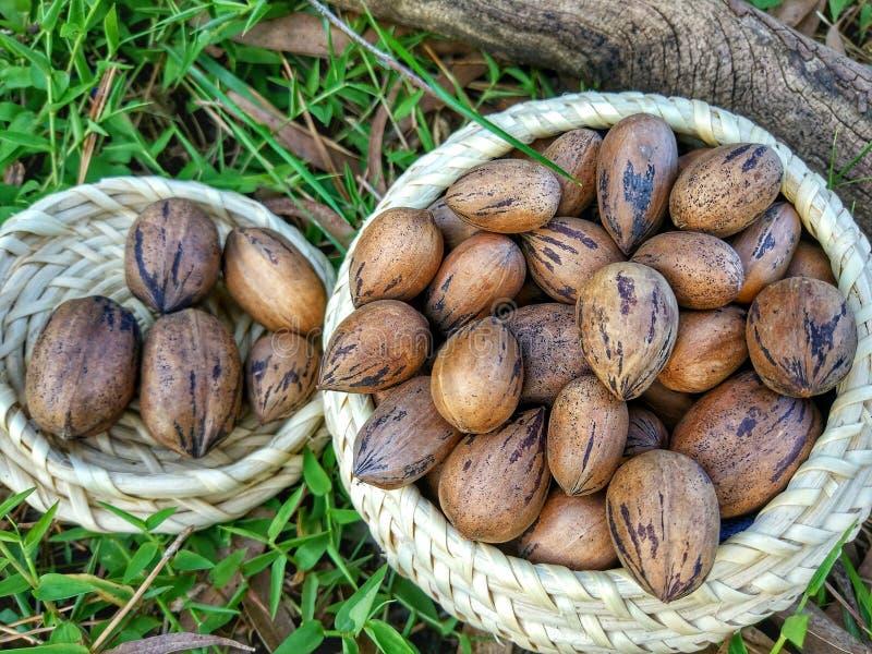 пекан иллюстрации предпосылки nuts безшовный стоковые изображения