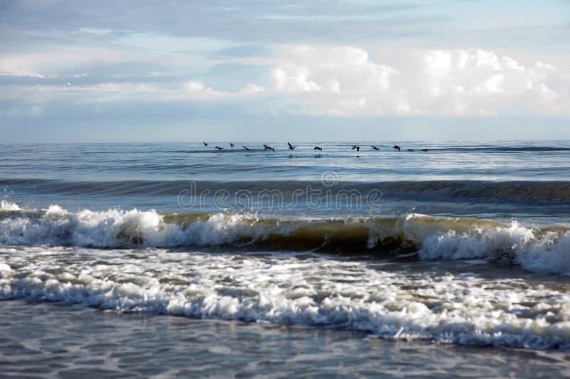 Пеликаны летая над прибоем на пляже стоковые изображения rf