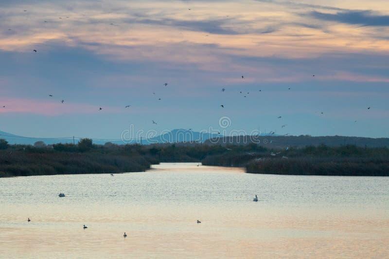 Пеликаны, цапли, чайки, утки и другие птицы летая над озером Vistonida в Rodopi, Греции стоковое фото rf