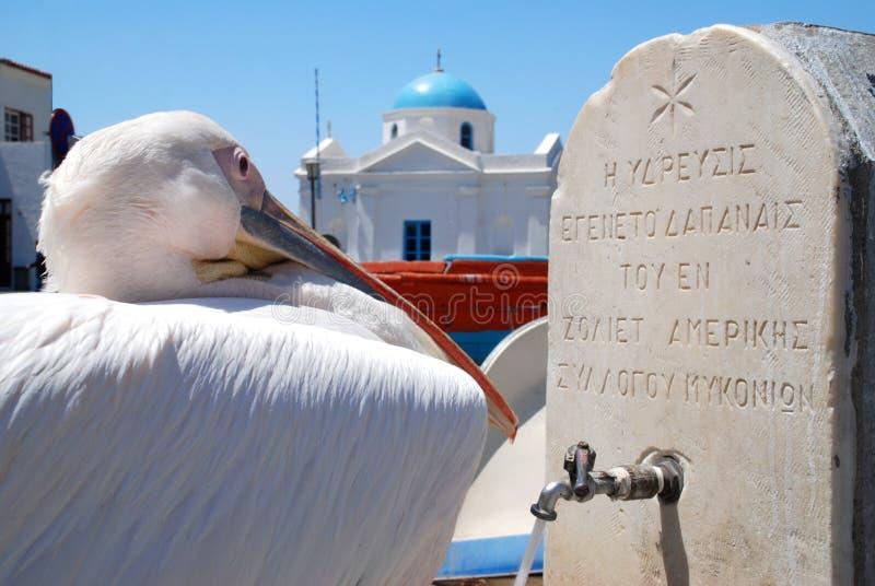 пеликан mykonos Греции стоковые фотографии rf
