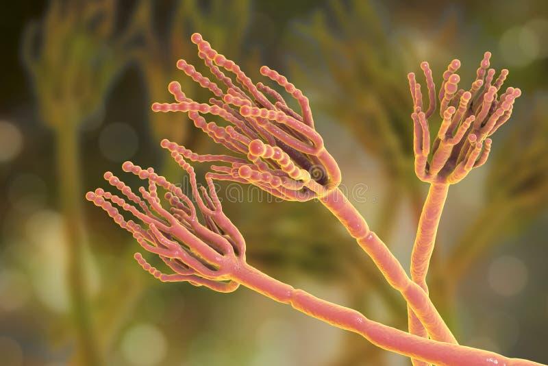 Пенициллиум грибков которые причиняют spoilage еды и использованы для продукции первого антибиотического пенициллина иллюстрация вектора