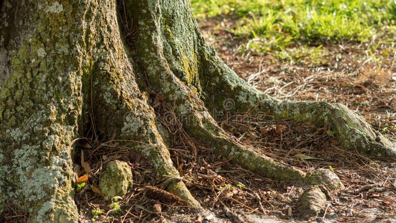 Пень дерева с мхом на заходе солнца стоковое изображение