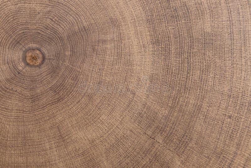 Пень дуба валил - раздел хобота с ежегодными кольцами стоковые фотографии rf