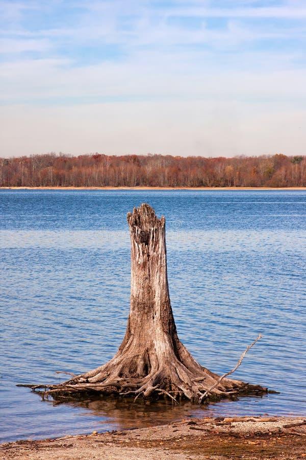 Пень дерева в озере резервуар стоковая фотография rf