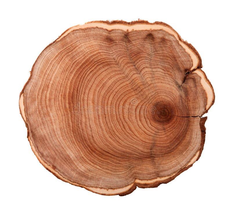 Пень дерева стоковая фотография