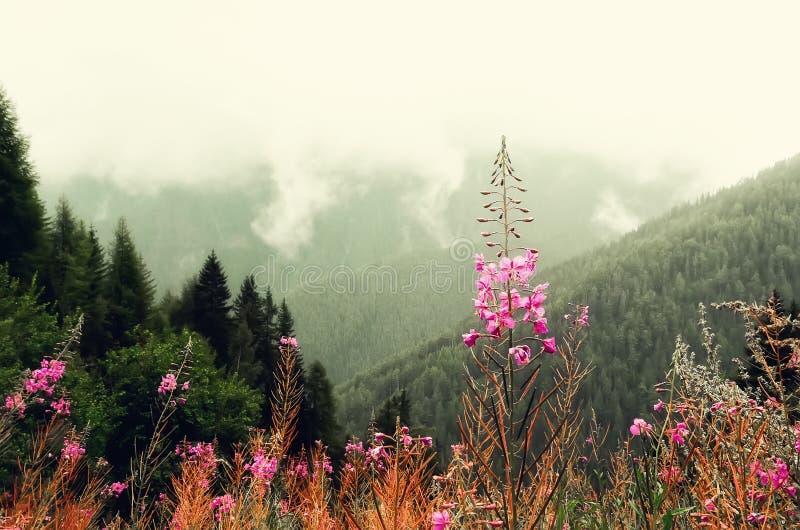 Первая весна цветет на предпосылке гор Альпов в пасмурном дне скопируйте космос Весна, лето, концепция перемещения в tendy стоковое фото