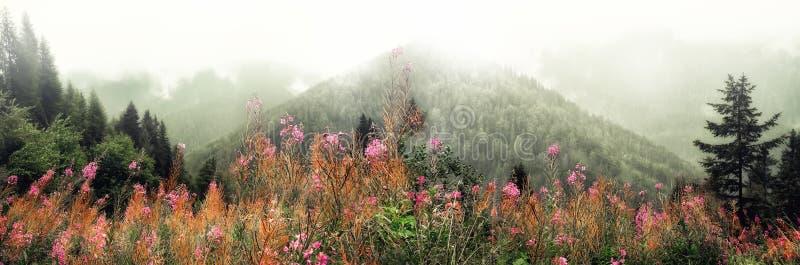 Первая весна цветет на предпосылке гор Альпов в пасмурном дне скопируйте космос Весна, лето, концепция перемещения в tendy стоковое фото rf