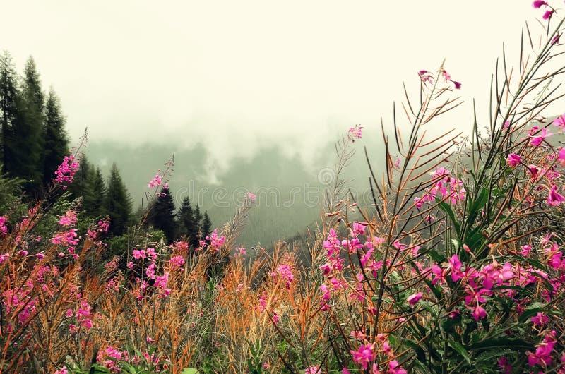 Первая весна цветет на предпосылке гор Альпов в пасмурном дне скопируйте космос Весна, лето, концепция перемещения в tendy стоковые фото