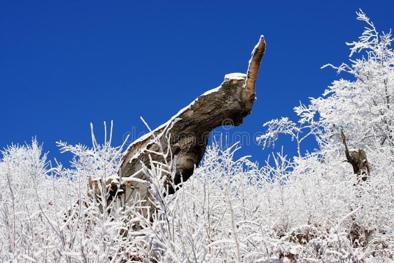 первая зима снежка лимба стоковое фото rf