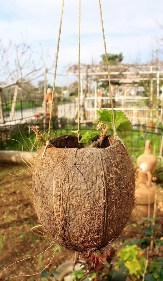 Первоначально цветочные горшки для цветка в кокосе стоковые фото