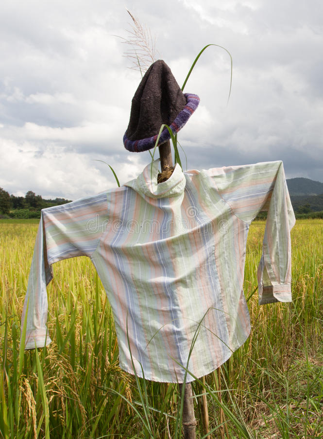 Первоначально чучело в рисовых полях стоковое фото rf