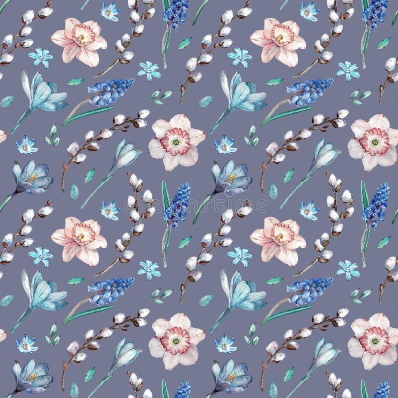 Первые цветки весны и ветви вербы Картина акварели безшовная на серой голубой предпосылке иллюстрация штока